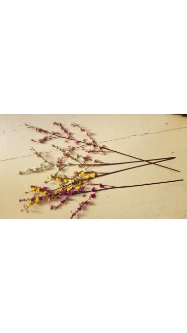 flori de mar 5/set